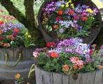 Какие цветы можно посадить на дачном участке
