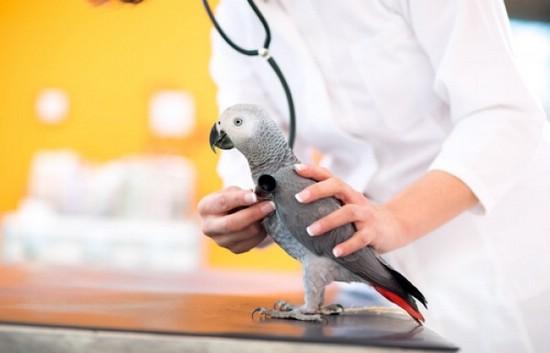 Ветеринар-орнитолог поможет питомцу